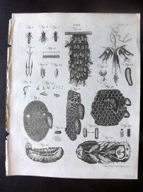 Encyclopaedia Britannica 1797 Antique Print. Bee. Isects Bees & Hive 96